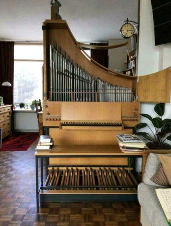 Pozytyw organowy Hofbauer