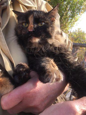 Кошечка пушистая красивая