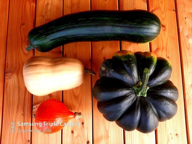 dynie dynia seler naciowy jarmuż kapusta buraczki warzywa