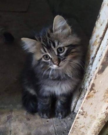 Милый домовёнок ищет дом !!!