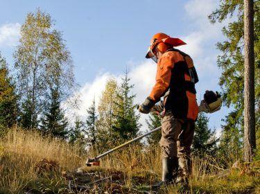 Limpeza terrenos. Abate de árvores