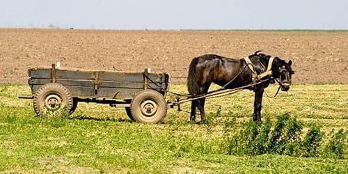 Продаються 2 вози. Кінні конячі парокінні. Кінь однокінькі