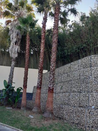 Arboricultor/Poda e abate de Palmeiras