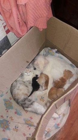 Котята милые игривые))