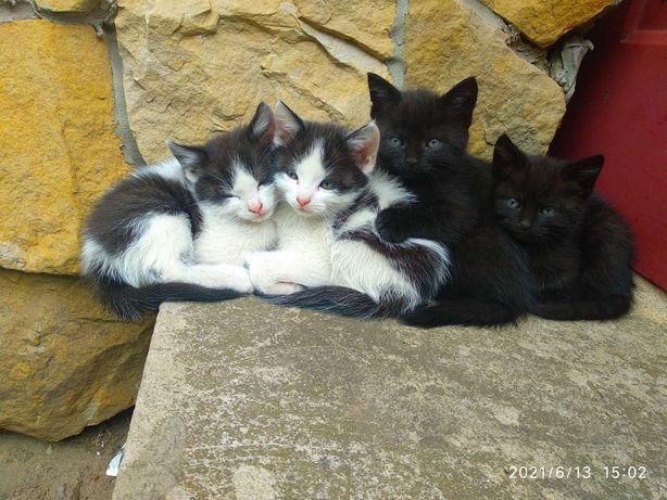 Oddam kotki odrobaczone korzystają z kuwety