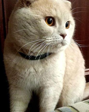 Кот ищет невесту