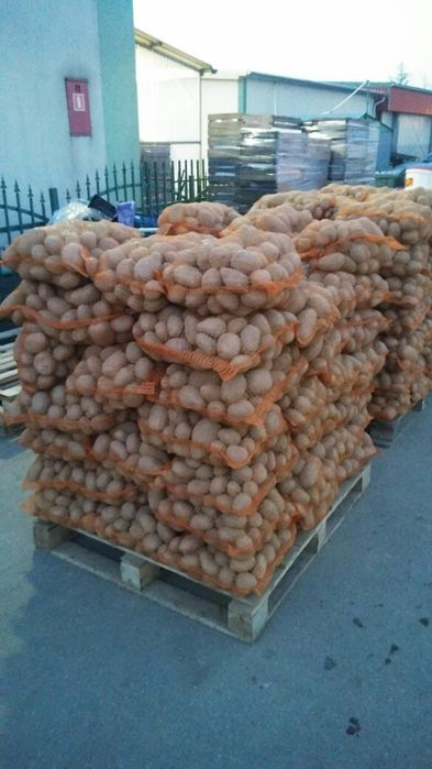 Ziemniaki jadalne Bellarosa  Vineta Brzozów - image 1