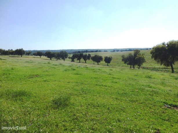 608Ha, terra limpa, sobreiros, pasto, olival. Portugal, Alentejo, É...