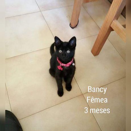 Bancy- gatinha bebê para adoção