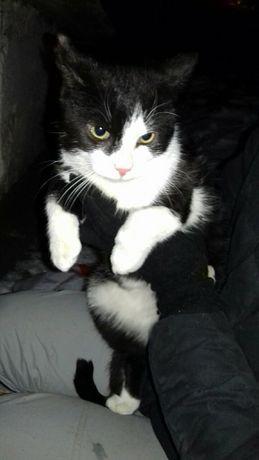 Выбросили в мороз на улицу домашнего котика