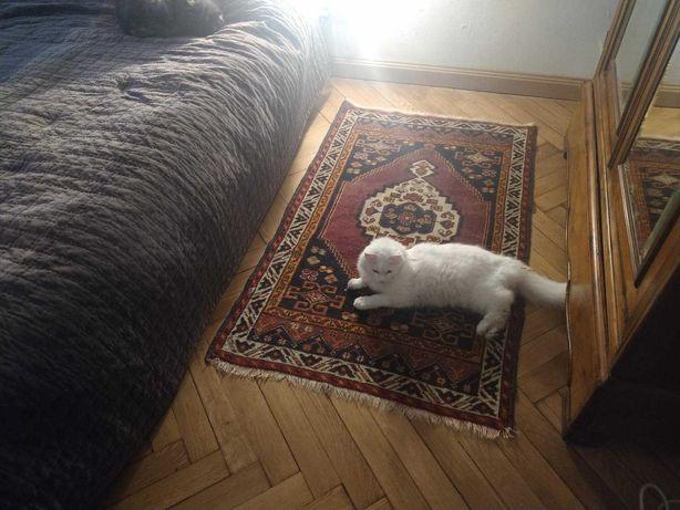 W-wa, nagroda 1000 zł; 12.2020 zaginęła biała kotka z puchatym ogonem