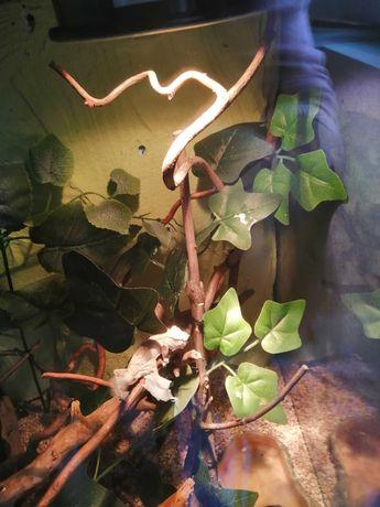 Kompletne terrarium z gekonem