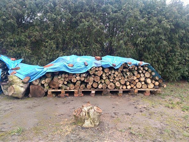 Drewno orzecha włoskiego (ok. 4 kubików)