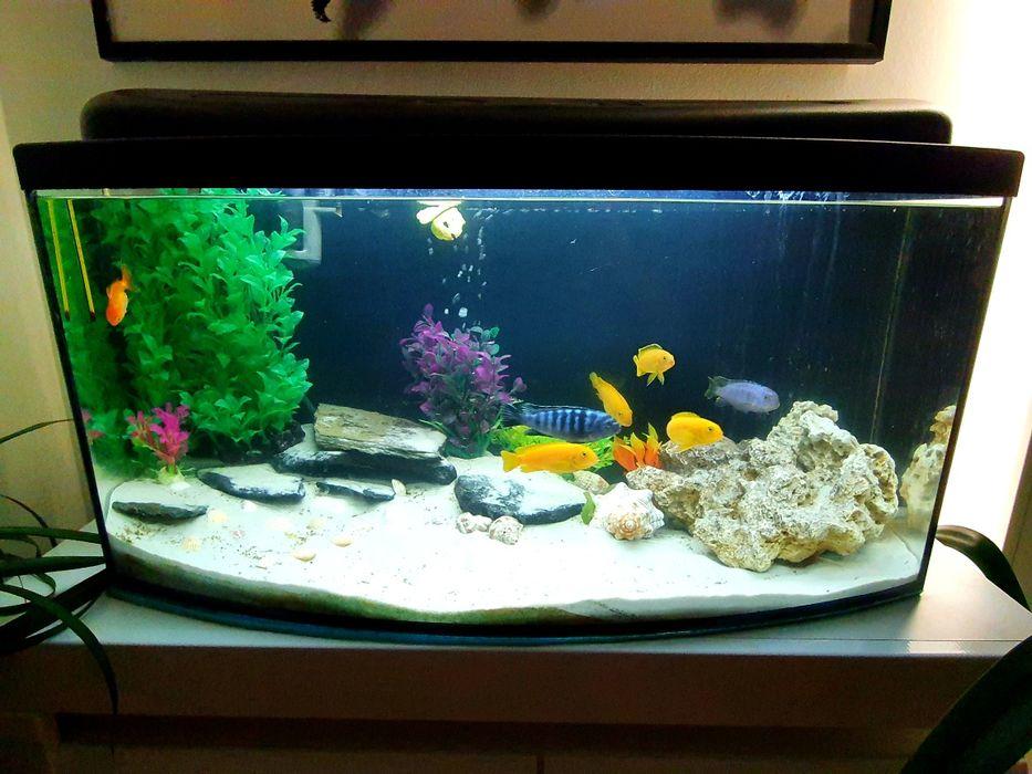 Akwarium 120l+całe wyposażenie+rybki Dretyń - image 1