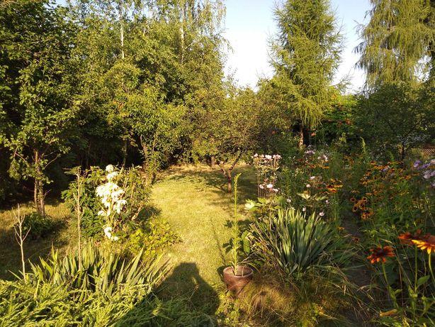 Ogród działkowy ROD POKÓJ, UL Armii Krajowej