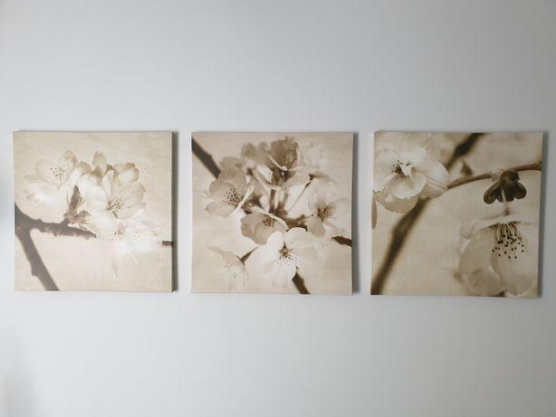 Obrazy  3 sztuki - wiśnie