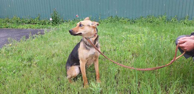 Найдена собака в Васищево