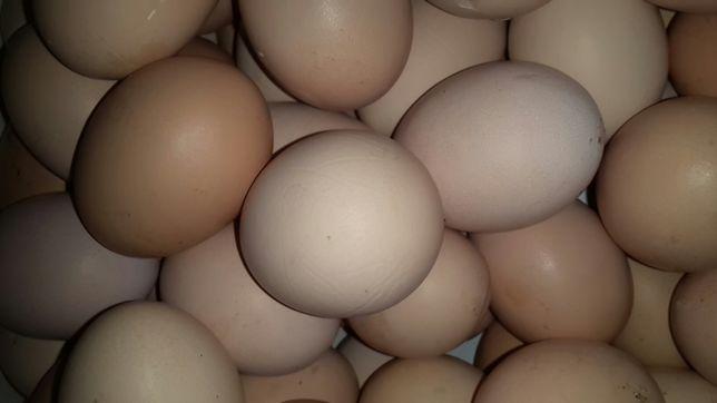 Jajka z wolnego wybiegu. Dowóz gratis
