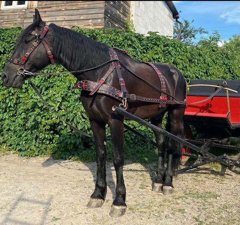 упряж для коней   уздечка недоуздок наголовник хома шлея ліци