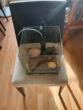Kostka akwariowa z wyposażeniem