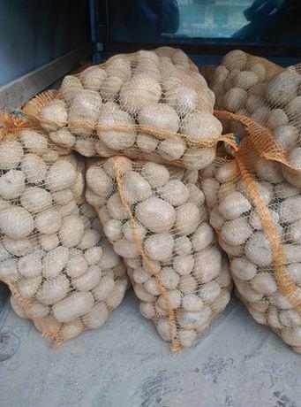 Ziemniaki Gala, Vineta (Wineta) z dowozem gmina Jasienica