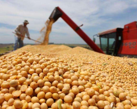 СОЯ KANSAS Канадские семена трансгенный сорт НОВЫЙ Насіння сої ГМО