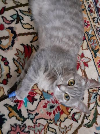 Кошечка 5 месяцев в добрые руки