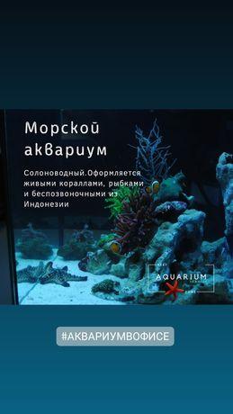 Профессиональное обслуживание аквариума