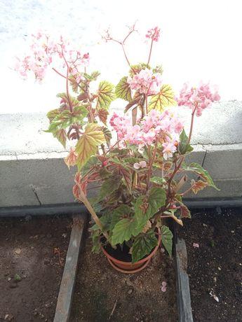 Plantas para venda