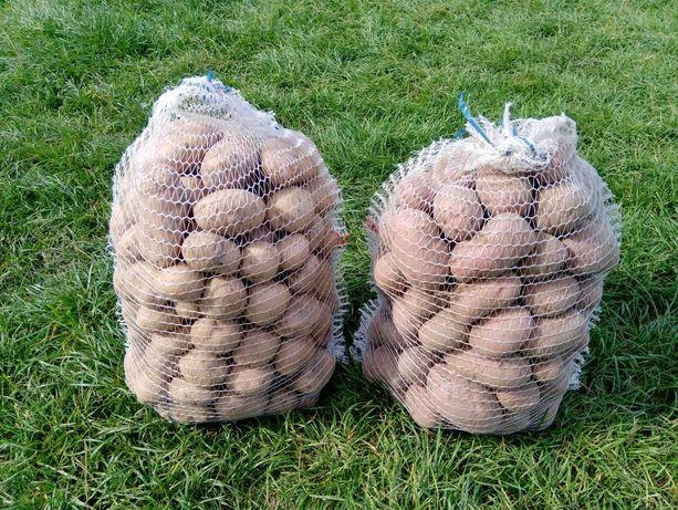 Ziemniaki z Dostawa 20 zł /15kg i 36 zł /30 kg