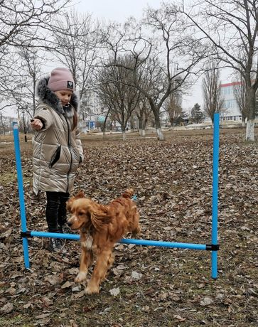 Бердянск, Дрессировка собак набор детской группы