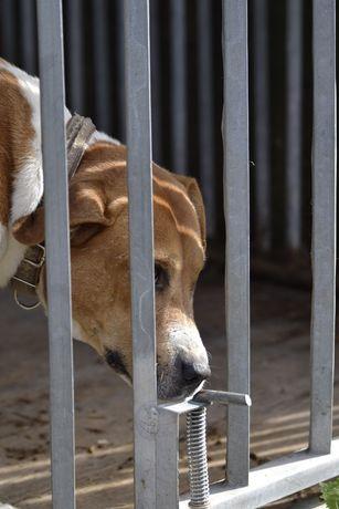 Potrzebny dobry dom adopcja pies samiec