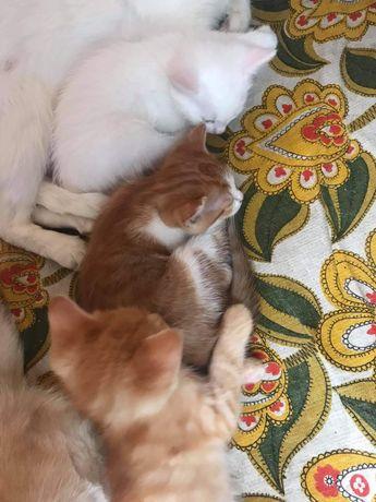 Kotek szuka domu