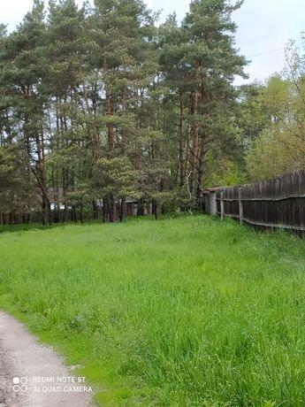 Земельный участок около леса. Фастовский район, с. Пришивальня.