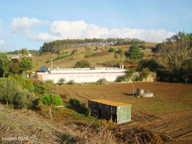 Terreno agrícola com árvores de fruto e uma área total de...