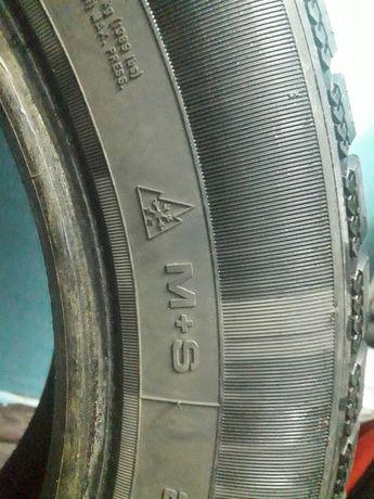 SAVA eskimo S3