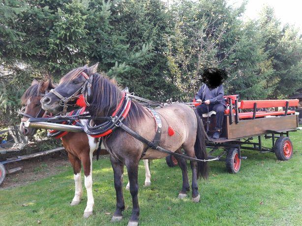 Wóz powóz bryczka ZAMIANA na hucuła konia huculskiego konika polskiego