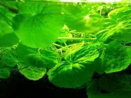 rośliny akwariowe zestaw
