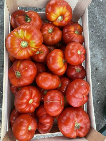 Cabaz de legumes biologico