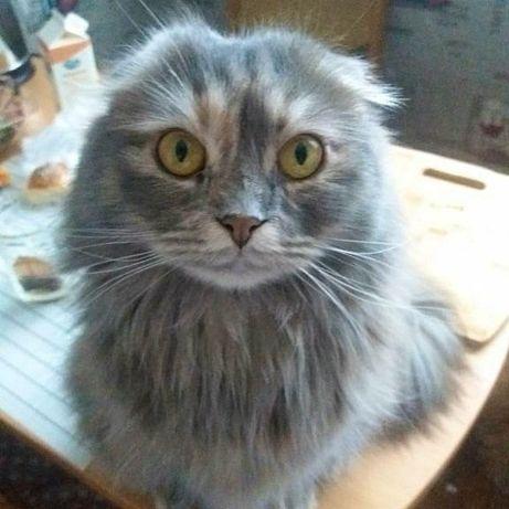 Пропала кошка ,проспект Гагарина