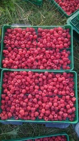 Продам ягоди малини