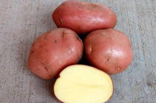 Продам картоплю, картошка зі свого городу
