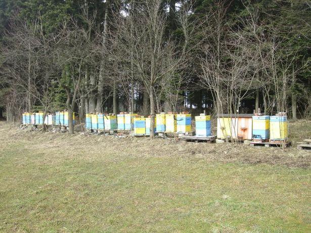Odkłady pszczele 4 ramkowe, pszczoły, matki pszczele,ule,pasieka,
