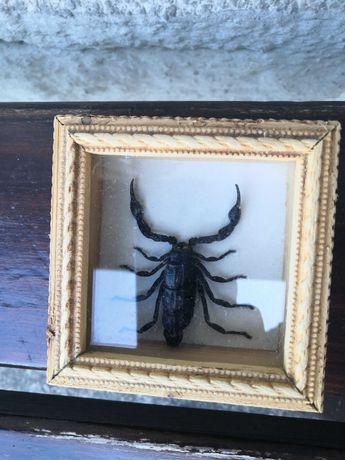 Szkatułka ze sztucznym skorpionem