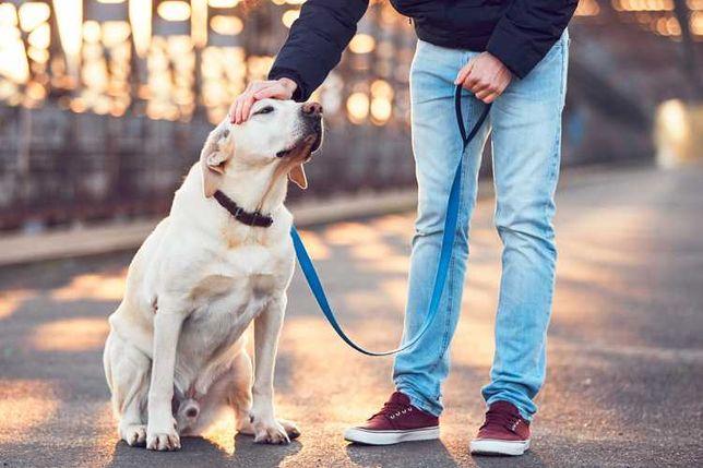 cuido/passeio seu animal estimacao
