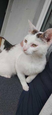 Tulaśny kot do adopcji! Małopolska