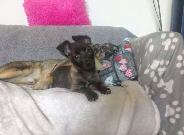 Pyza to malutkie psie dziecko, w tym momencie ma ok. 10-12 tygodni.