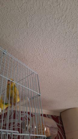 Отдам жёлтого волнистого попугая