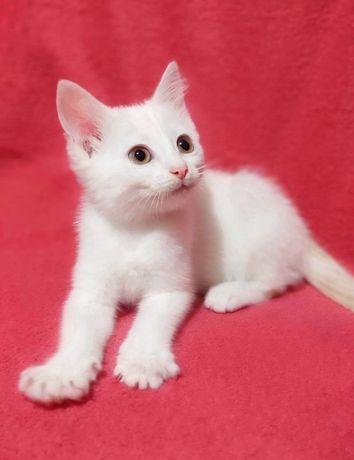Красивый котёнок в хорошие руки, девочка, в дар