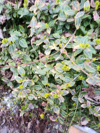 Lilie i inne kwiatki ogrodowe